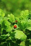 The Ladybird Stock Photos