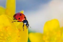 Ladybird / Ladybug Stock Photo