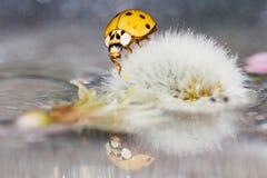 Ladybird / Ladybug Royalty Free Stock Photo