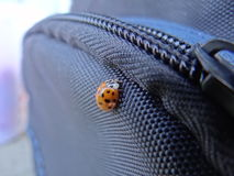 Ladybird. Ladybug sitting near the zippers on the bag for the camera Royalty Free Stock Images