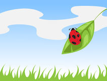 Ladybird on a leaf Stock Image