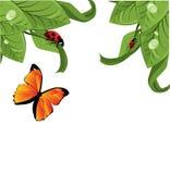 Ladybird on leaf Royalty Free Stock Photos