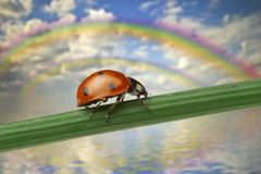 Ladybird on a leaf and rainbow Royalty Free Stock Photos
