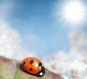 Ladybird on a leaf Stock Photography
