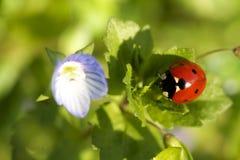 Ladybird on leaf Stock Photos