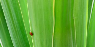 Ladybird on leaves Royalty Free Stock Images