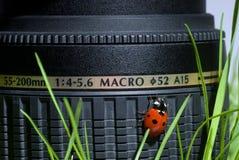 Ladybird on lens Stock Image
