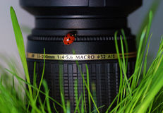 Ladybird on lens Royalty Free Stock Photo