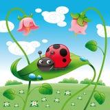 ladybird liść Zdjęcia Royalty Free