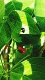 Ladybird macchiato nero e giallo fotografia stock