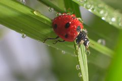 Ladybird. Macro of the nature royalty free stock photos