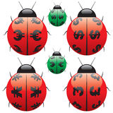 Ladybird Money. Ladybird insect. This is my graphical opinion Royalty Free Stock Images