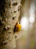 Ladybird moulting 1 Stock Photo