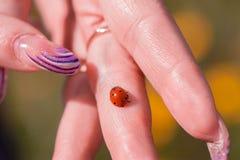 Ladybird na ręce Fotografia Stock