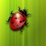 Ladybird na zielonym liściu. royalty ilustracja