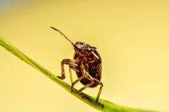 Ladybird na zielonym liściu w ogródzie Zdjęcia Stock