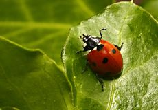 Ladybird Norway Stock Photography