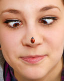 Ladybird on nose Stock Images