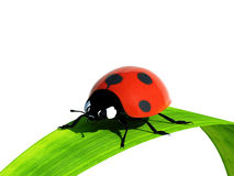 Ladybird On A Blade Of Grass. Royalty Free Stock Images