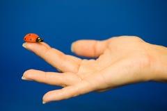 Free Ladybird On Finger Royalty Free Stock Image - 1320056