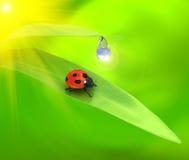Ladybird over green background Stock Photos