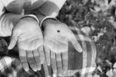 Ladybird is on the palm of the girl. Black and white. Ladybird is on the palm of the girl in a park. Black and white Stock Image