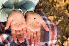 Ladybird is on the palm of the girl. A girl sitting on the ground in the park Stock Photography