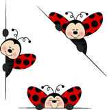 Ladybird  peeking from behind in various positions Stock Images