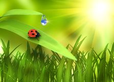Ladybird on plant over green background Royalty Free Stock Photo