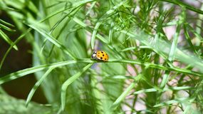Ladybird przygoda zdjęcia royalty free