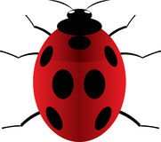 Ladybird. Red ladybird bug with seven black dots Royalty Free Stock Image