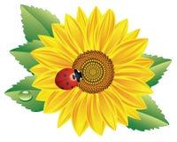 ladybird słonecznik ilustracja wektor