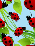 Ladybird seamless background Stock Images
