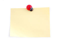 Ladybird on a sheet Stock Images