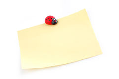 Ladybird on a sheet. For notes Stock Photo