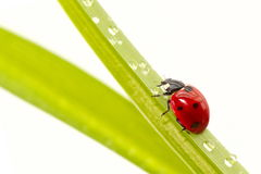 Ladybird sit on grass Stock Image