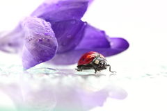 Ladybird sit on grass Stock Photos