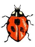 Ladybird Royalty Free Stock Photos