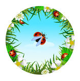 Ladybird on sky background. Insect and summer nature icon. ladybird on sky background  in a clearing in a circle around flowers Royalty Free Stock Images