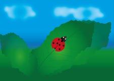Ladybird sulla foglia Immagine Stock