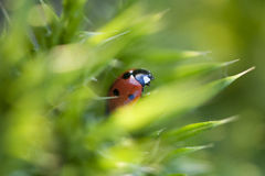 Ladybird on a Sunny Day Royalty Free Stock Photo