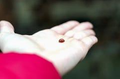 Ladybird sur le Palm Spring Images libres de droits