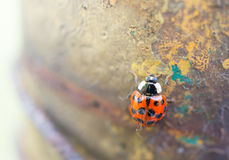 Ladybird sur le poteau Images libres de droits