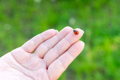 Ladybird sur une main femelle Dans l'unité avec la nature palmistry Estimation sur le bras Soin d'hygiène et de main Photos libres de droits