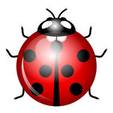 Ladybird (symbol of good luck) Stock Photo