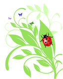 Ladybird on trailing plant Royalty Free Stock Photography