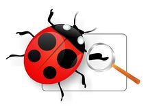 Ladybird under magnifying glass. Royalty Free Stock Photo