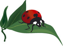 Ladybird vector Royalty Free Stock Images