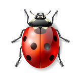 Ladybird vector illustration Stock Image