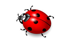 Ladybird. Vector illustration of ladybug on white Stock Image